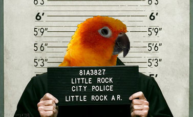 dysfunctional parrot in jail