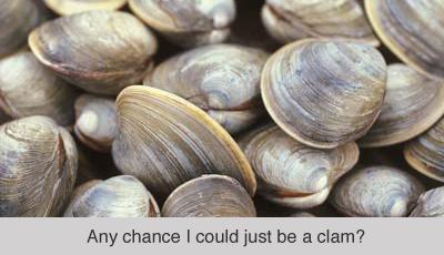clam_ufc