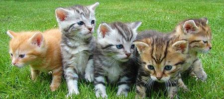 kittens2